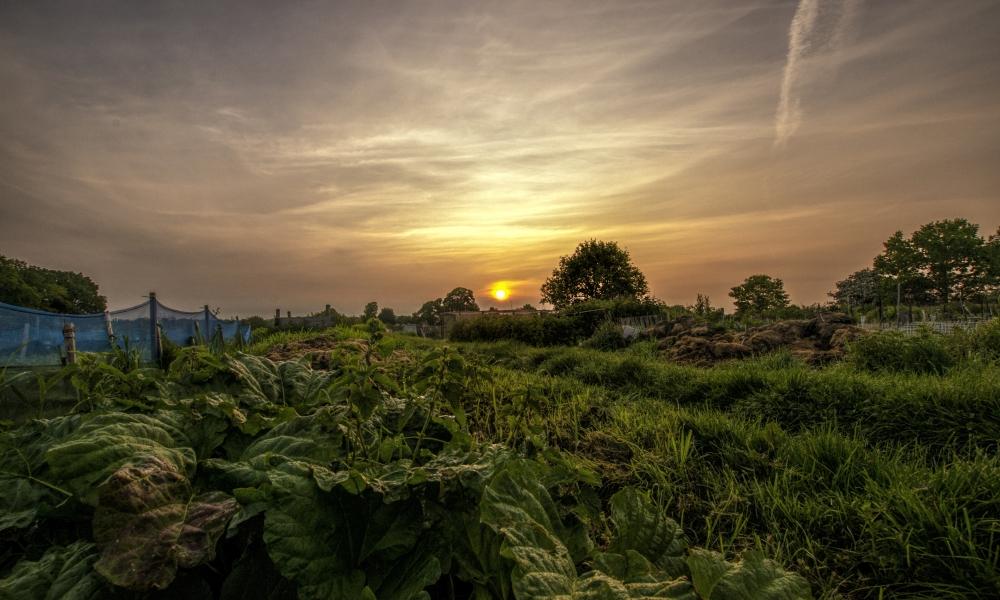 Puesta de sol en el campo - 1000x600