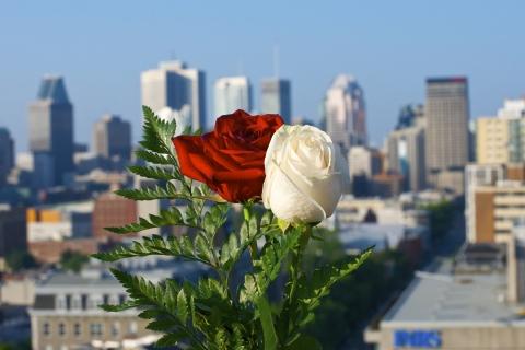 Rosas blanca y roja - 480x320