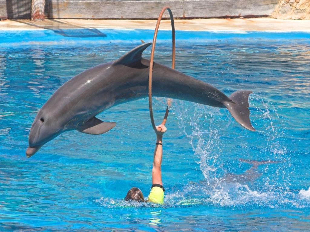 Saltos de delfines - 1024x768