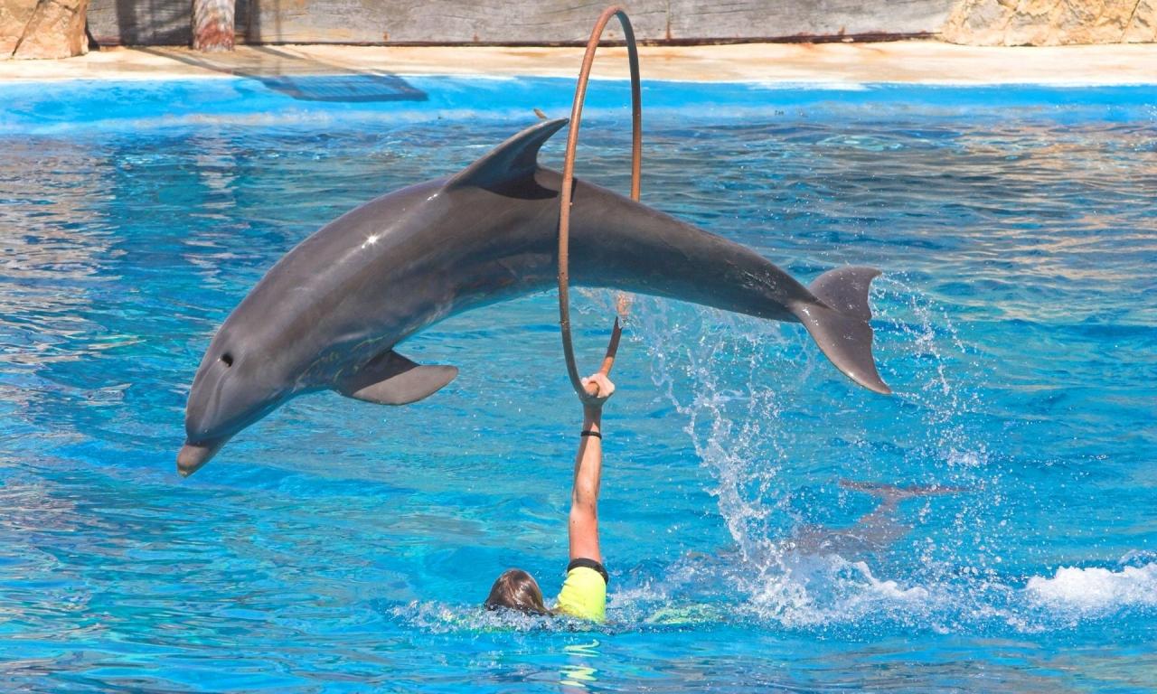 Saltos de delfines - 1280x768