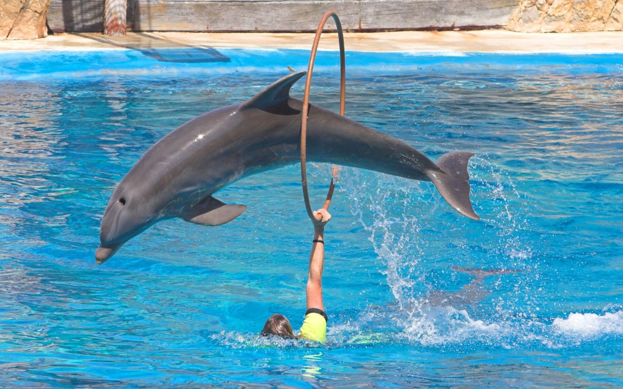 Saltos de delfines - 1280x800