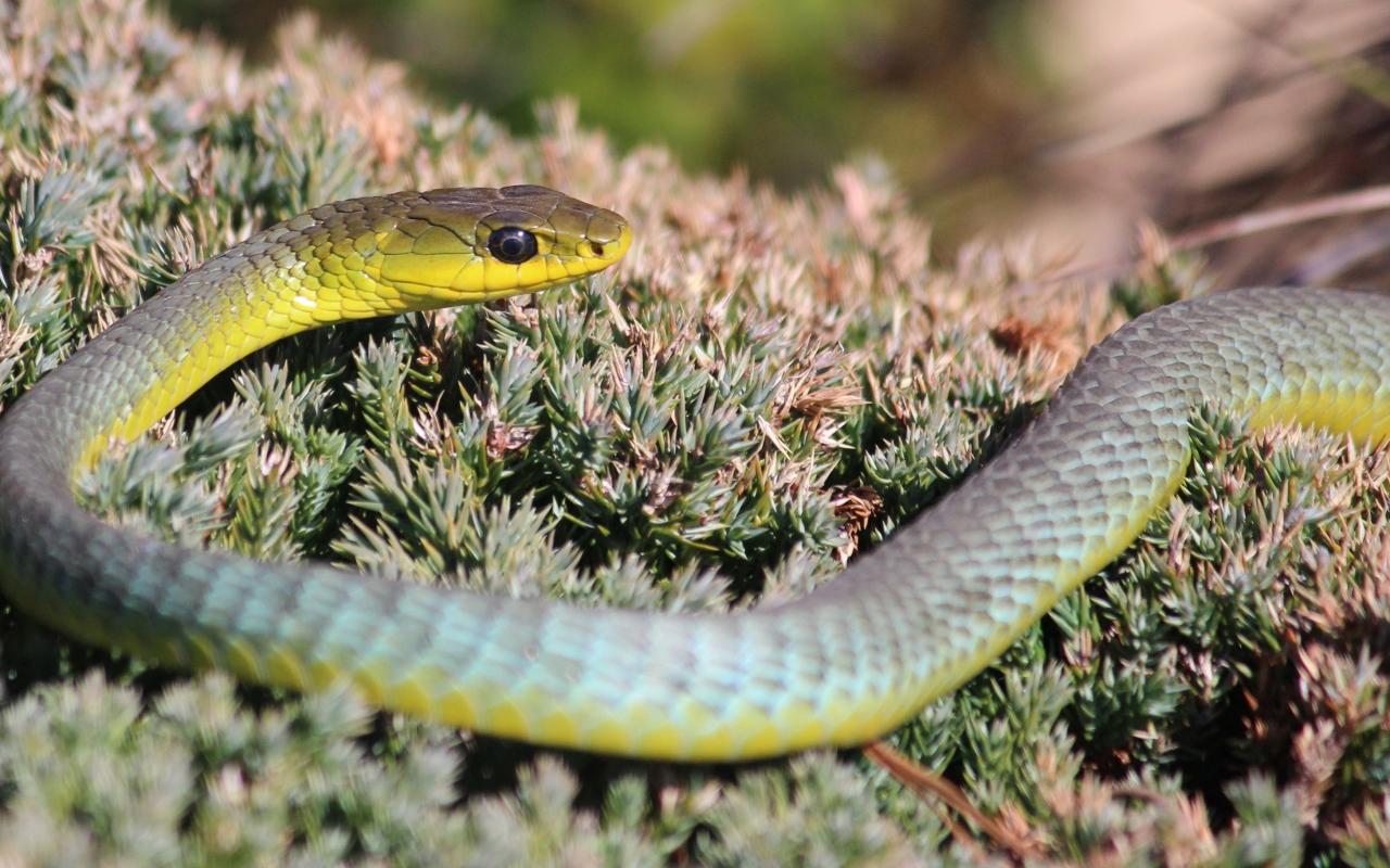 Serpiente verde de arboles - 1280x800