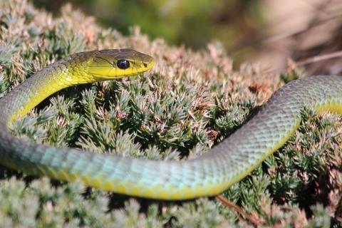 Serpiente verde de arboles - 480x320