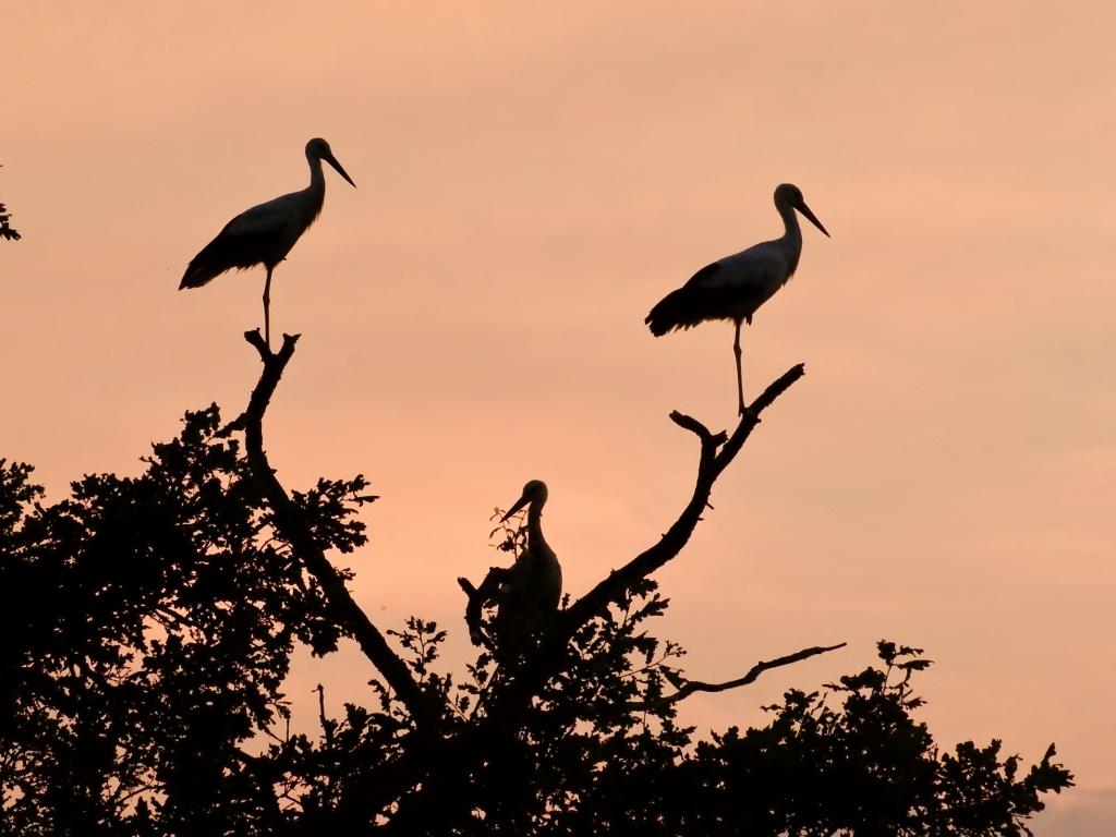 Siluetas de aves - 1024x768