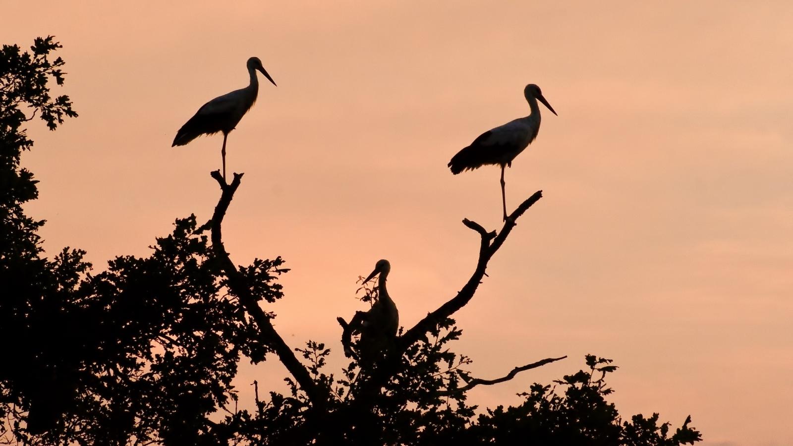 Siluetas de aves - 1600x900