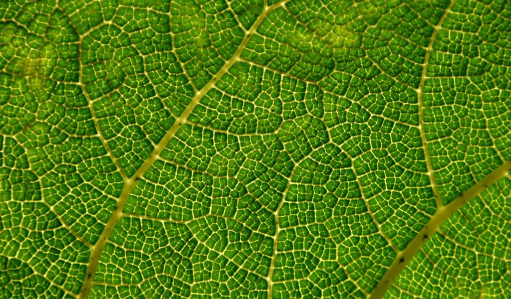 Textura de hoja de arbol - 1024x600