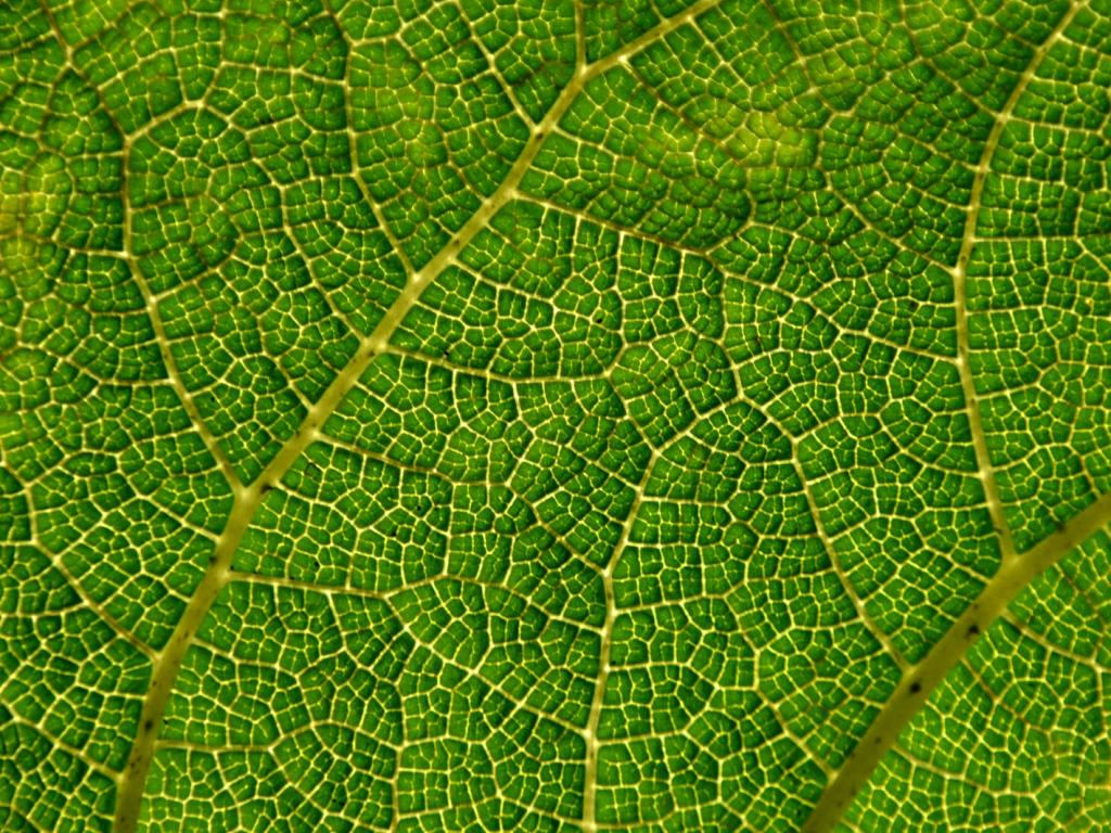 Textura de hoja de arbol - 1024x768