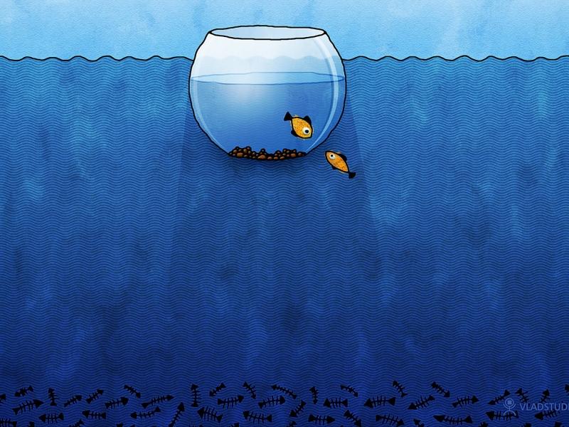 Un acuario en digital - 800x600