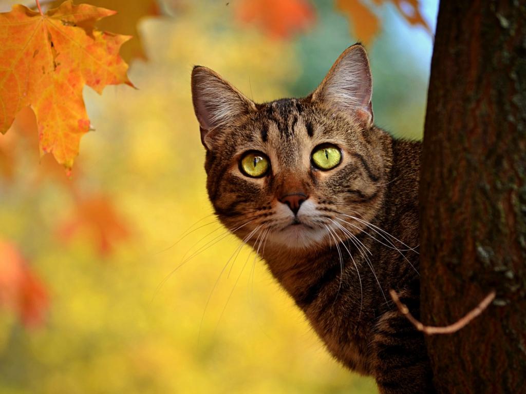 Un gato en un árbol - 1024x768