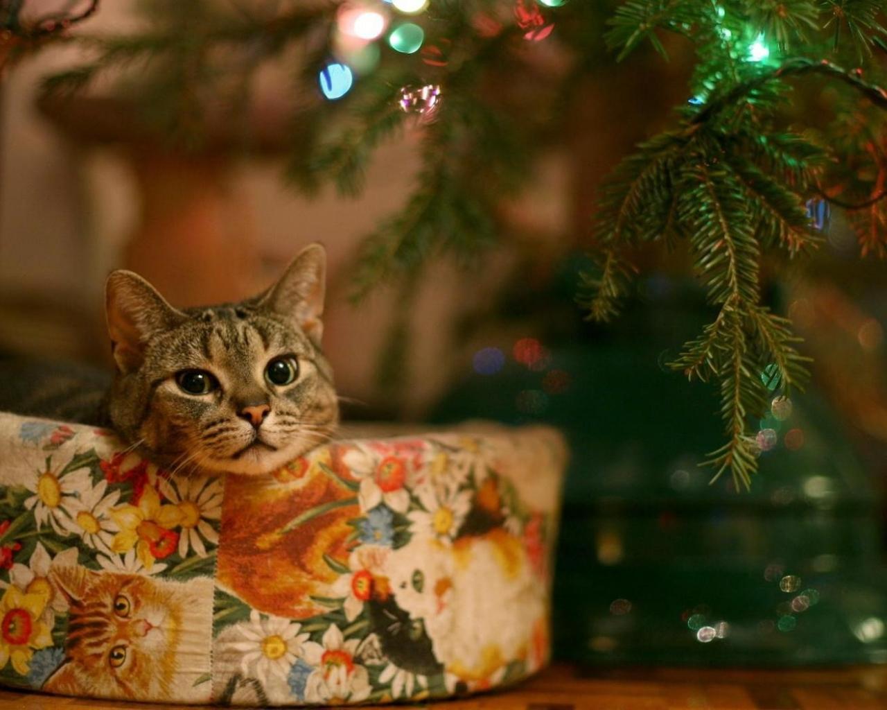 Un gato junto al arbol de navidad - 1280x1024