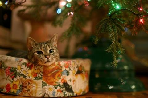 Un gato junto al arbol de navidad - 480x320