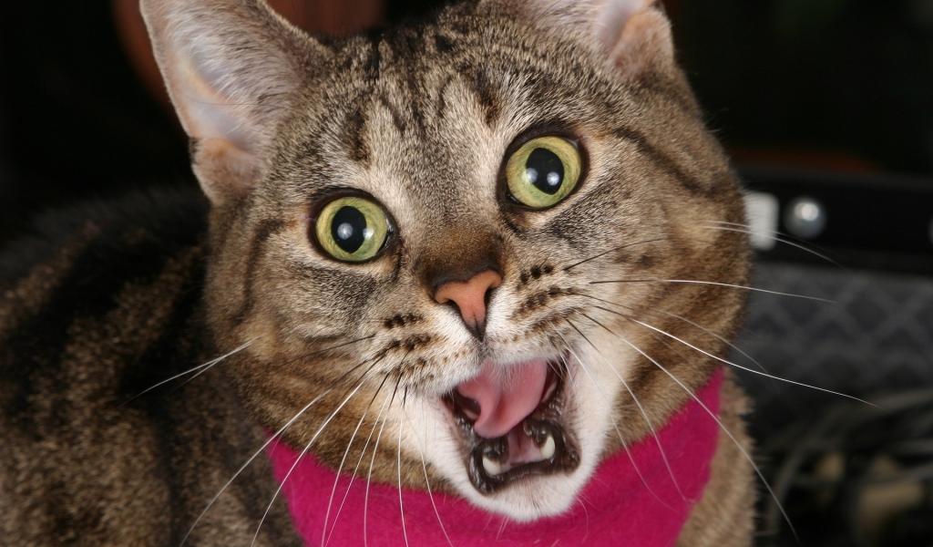 Un gato sorprendido - 1024x600