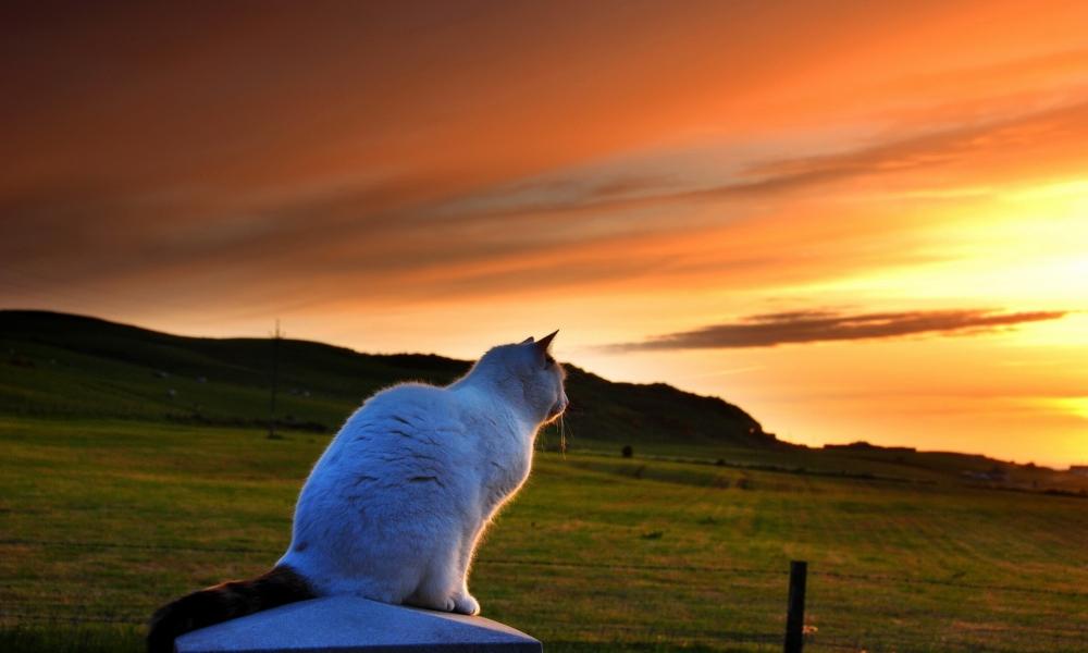 Un gato viendo el atardecer - 1000x600