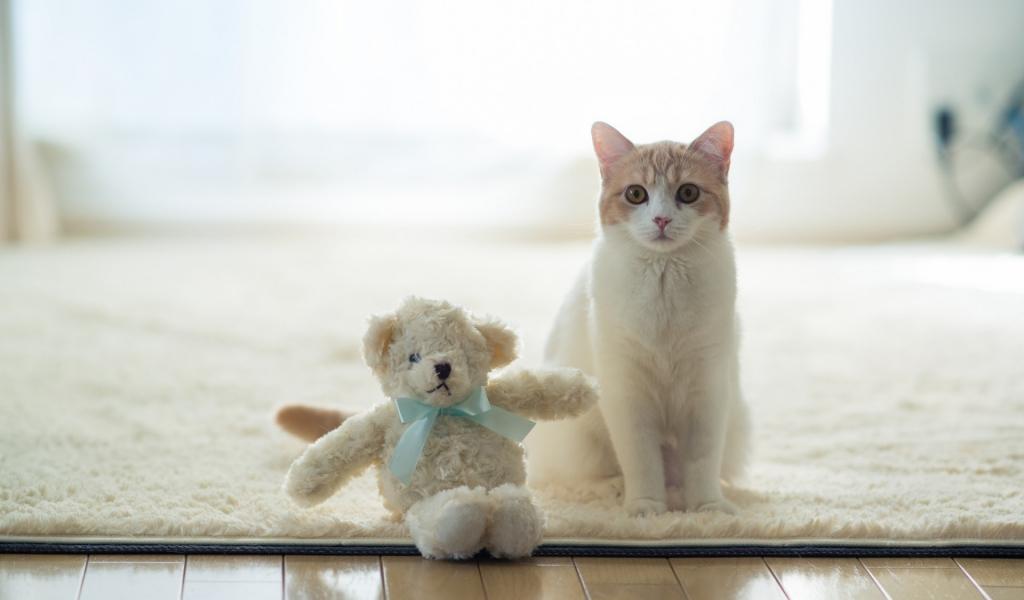 Un gato y su peluche - 1024x600