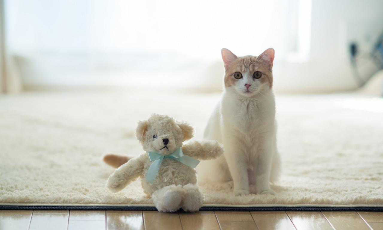 Un gato y su peluche - 1280x768