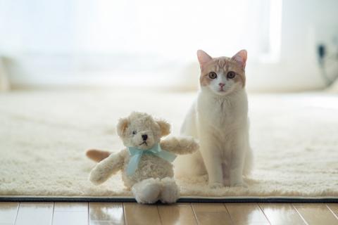 Un gato y su peluche - 480x320
