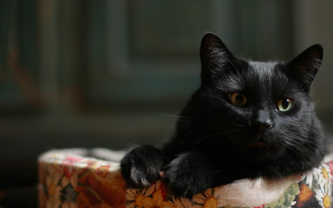 Un pequeno gato acostado - 1280x800
