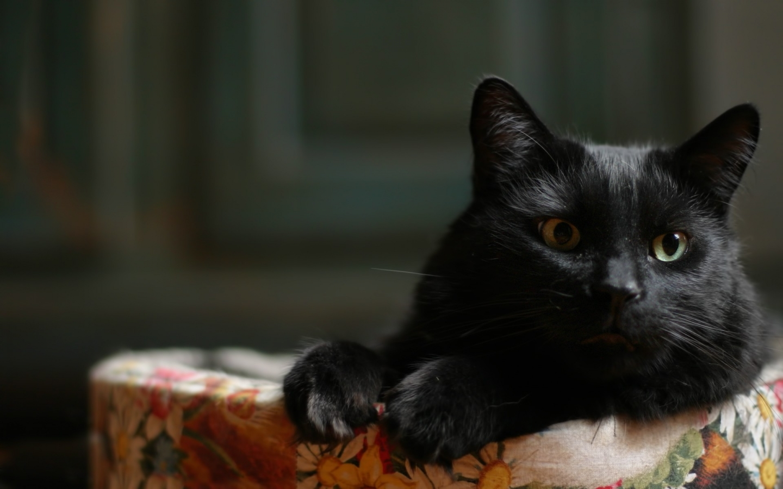 Un pequeno gato acostado - 1440x900