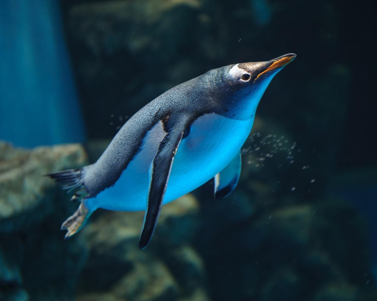 Un pinguino buceando - 1280x1024