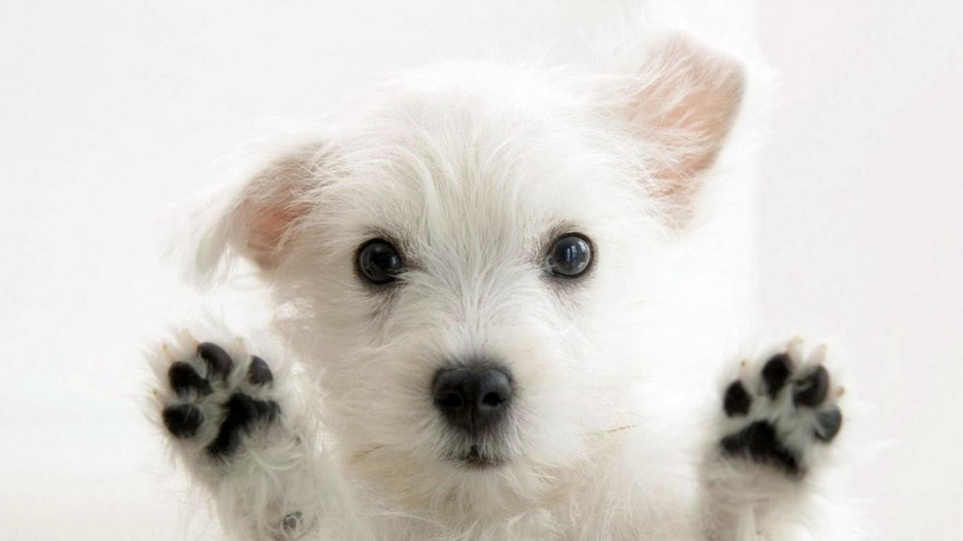 Un tierno perro bebe - 1366x768
