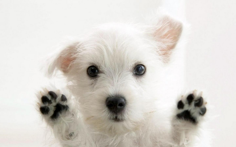 Un tierno perro bebe - 1440x900