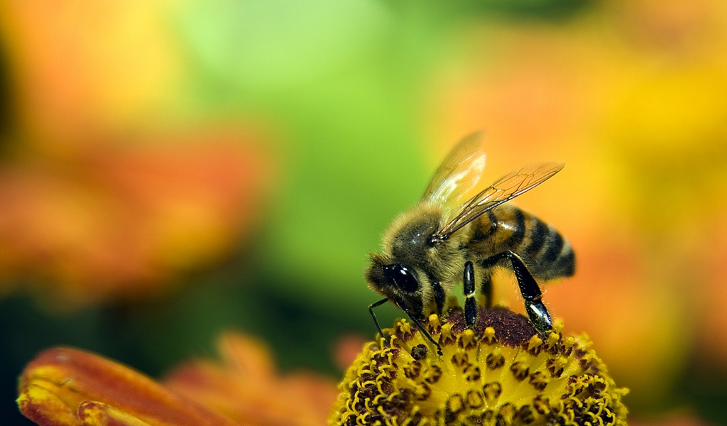Una abeja en las flores - 1024x600