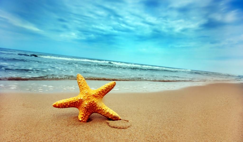 Una estrella de mar - 1024x600