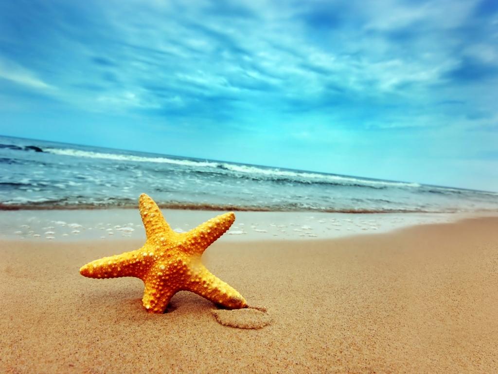 Una estrella de mar - 1024x768