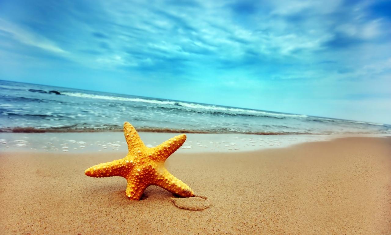 Una estrella de mar - 1280x768