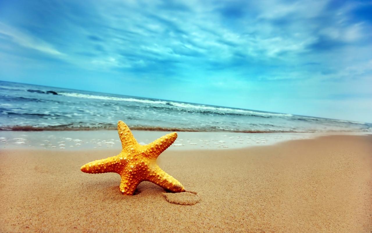 Una estrella de mar - 1280x800