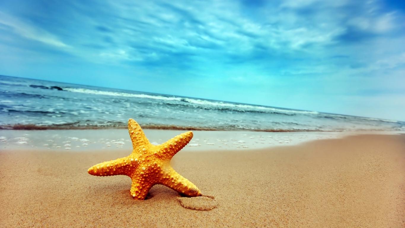 Una estrella de mar - 1366x768