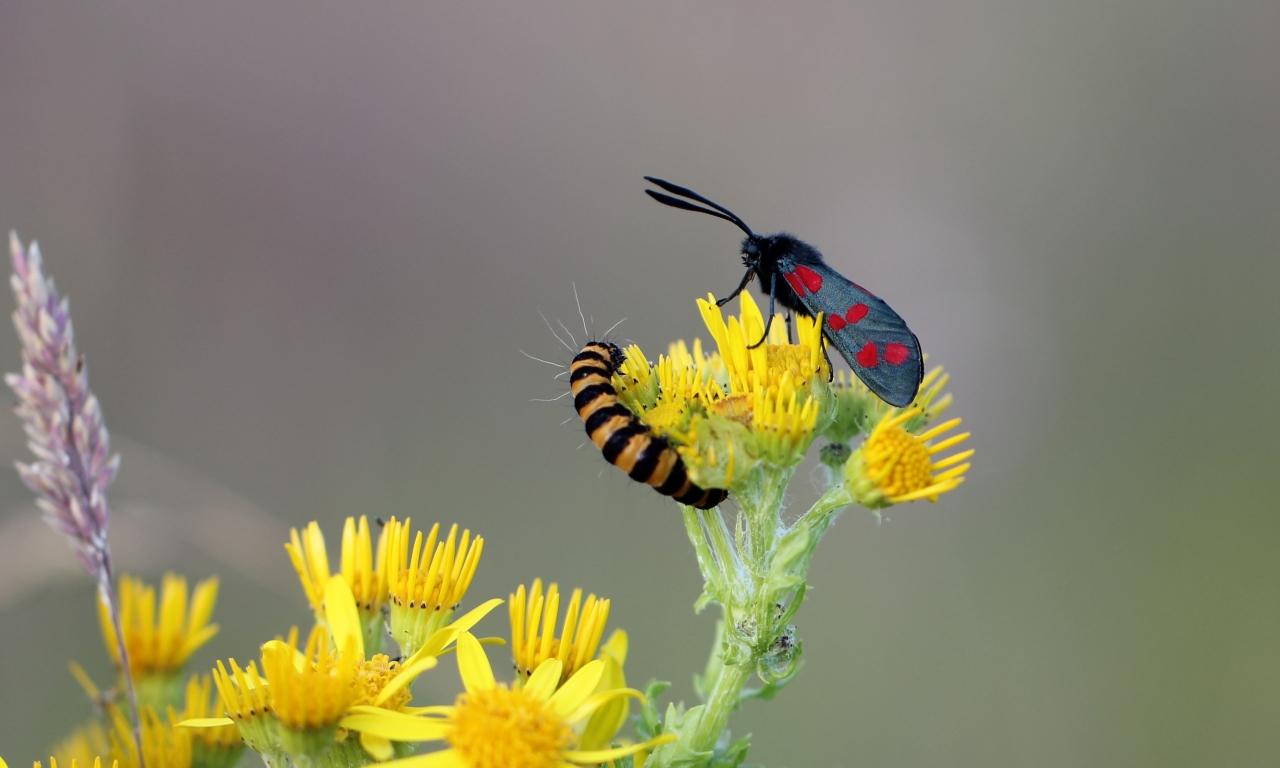 Una pareja de insectos - 1280x768