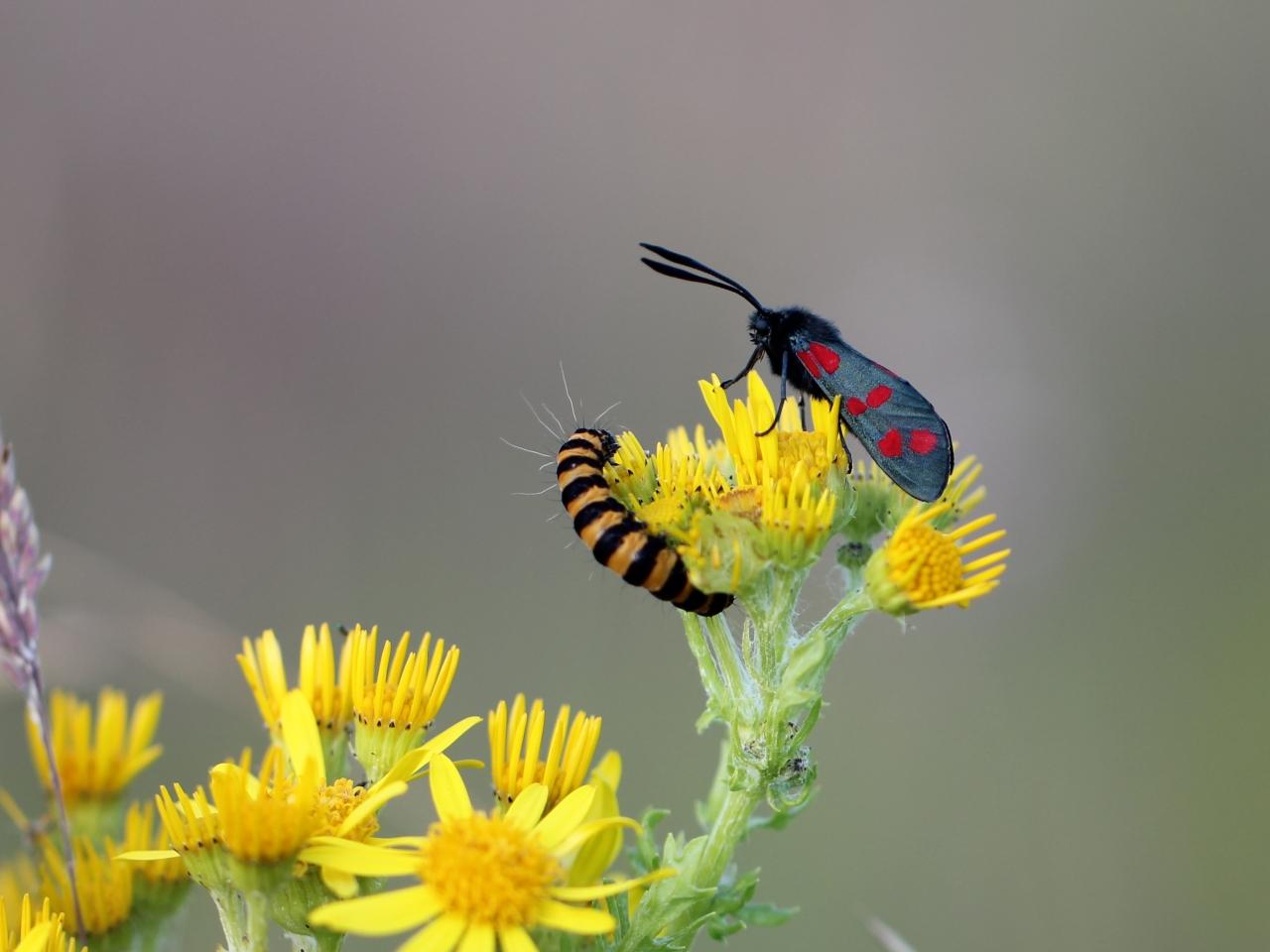 Una pareja de insectos - 1280x960
