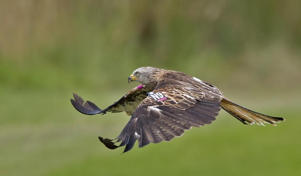Vuelo de un Aguila - 1024x600