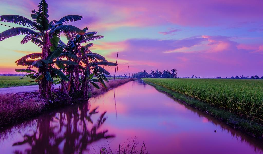 Puesta de Sol color Púrpura - 1024x600