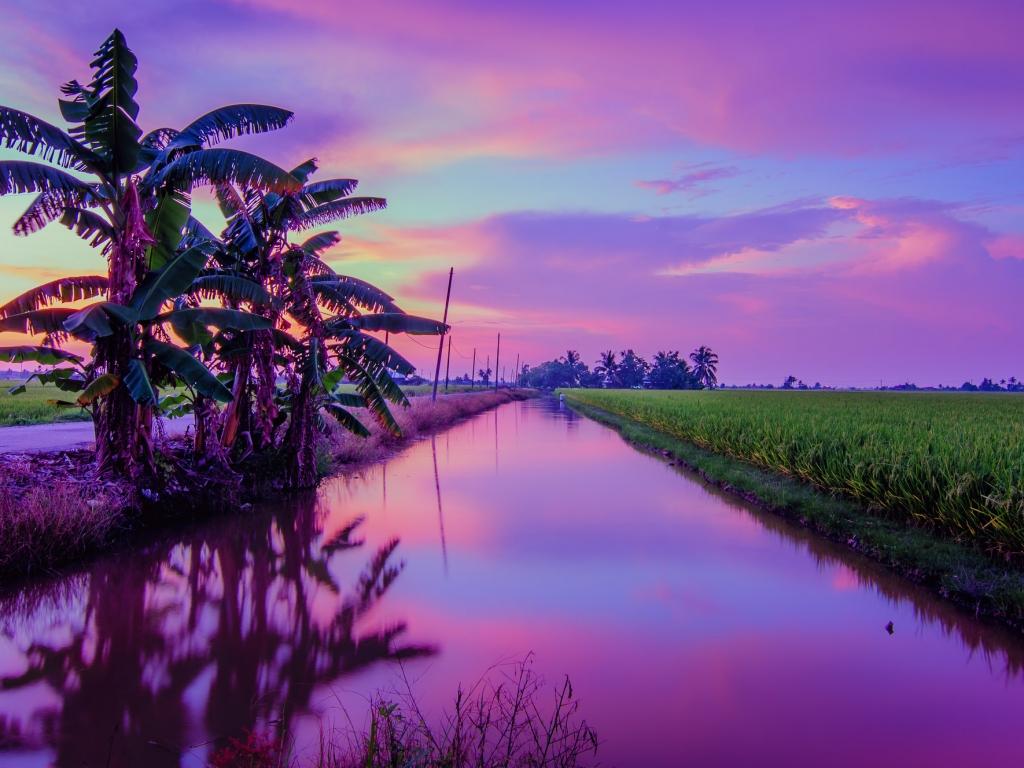 Puesta de Sol color Púrpura - 1024x768