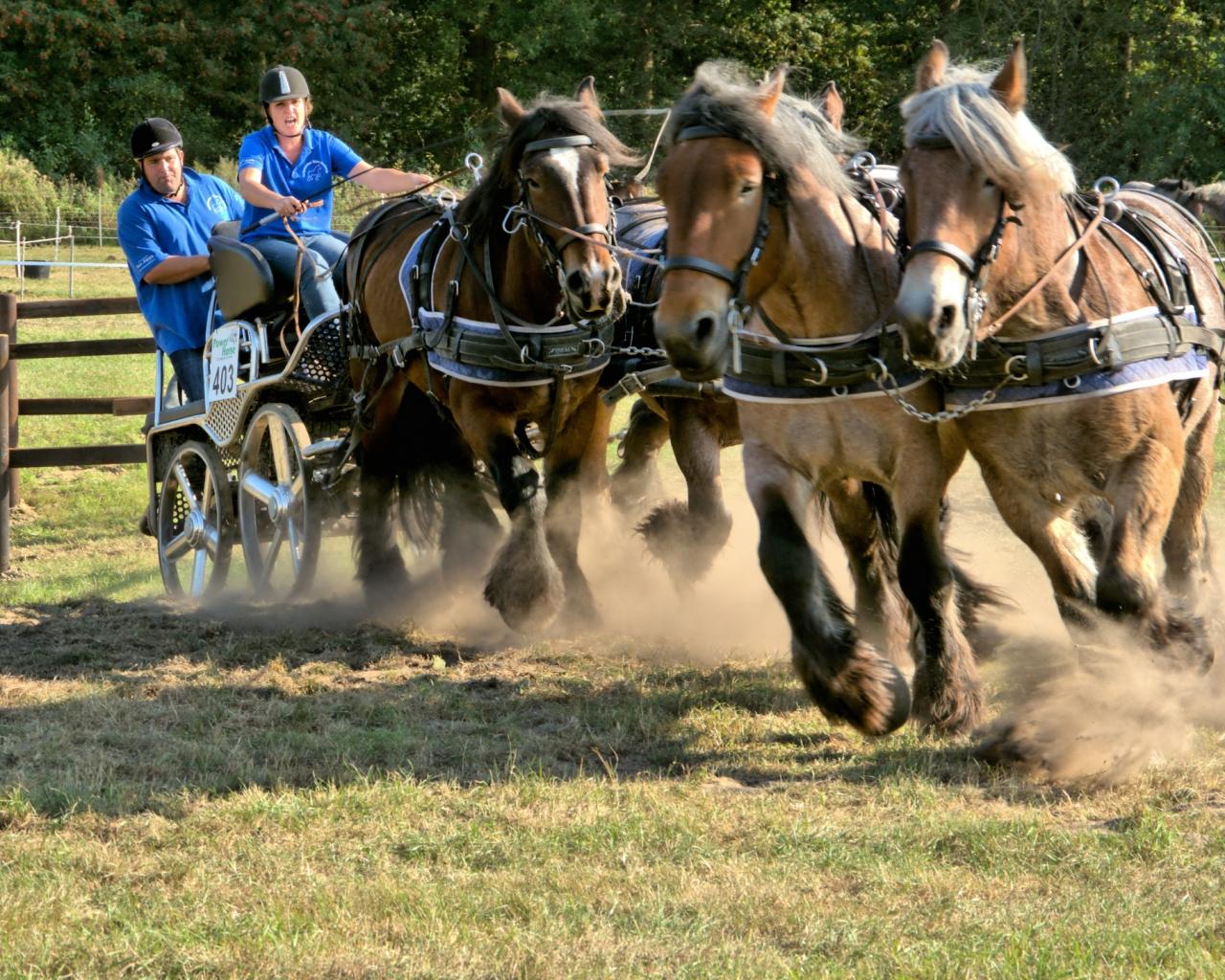 Caballos corriendo en carreras - 1280x1024