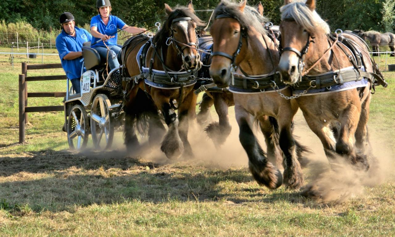 Caballos corriendo en carreras - 1280x768