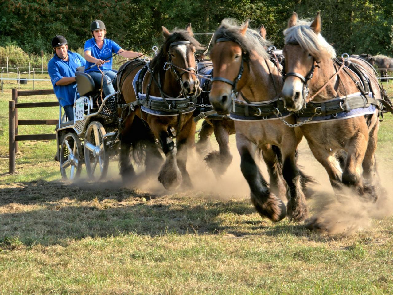 Caballos corriendo en carreras - 1280x960