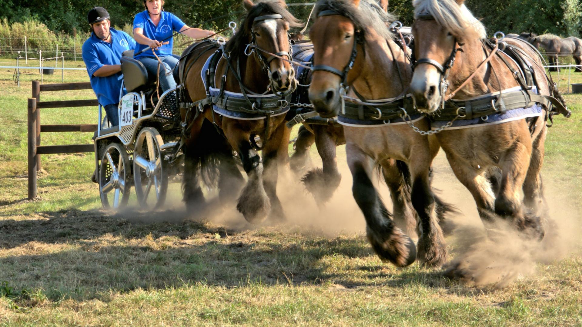 Caballos corriendo en carreras - 1920x1080