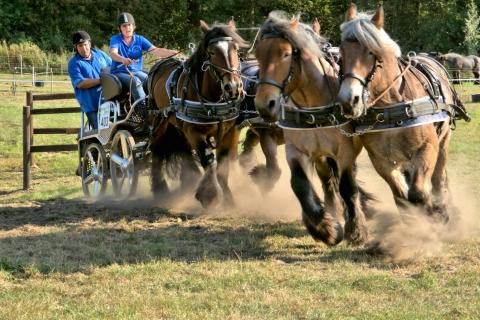 Caballos corriendo en carreras - 480x320