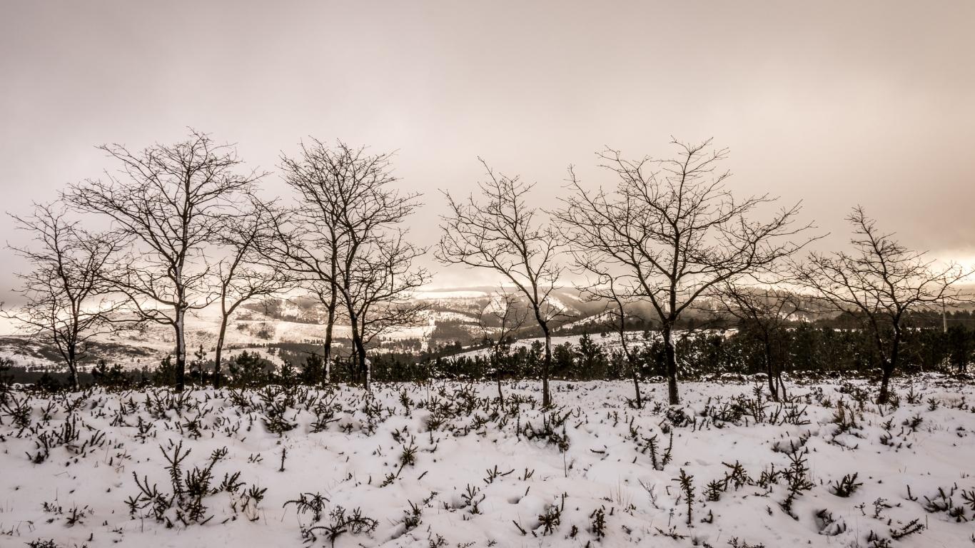 Otoño en las nieves - 1366x768