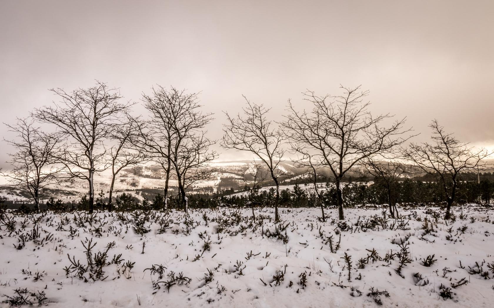 Otoño en las nieves - 1680x1050