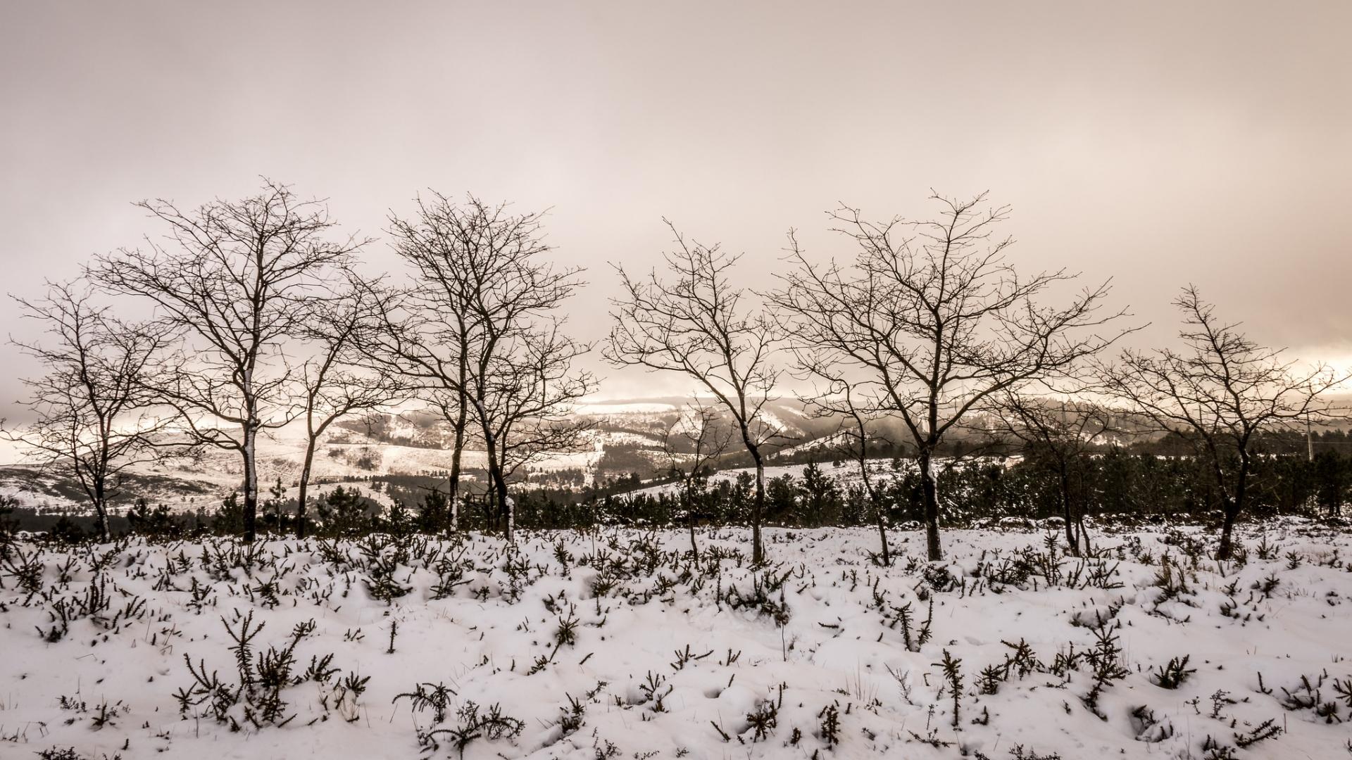 Otoño en las nieves - 1920x1080