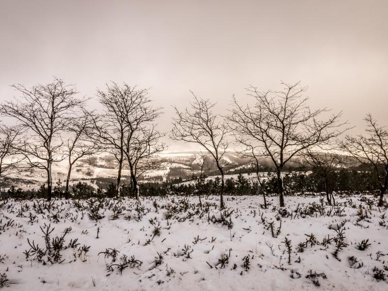 Otoño en las nieves - 800x600