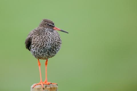 Aves hermosas - 480x320