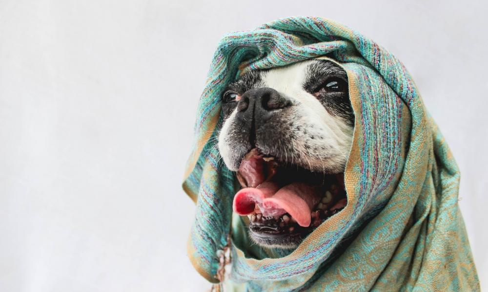 Bufandas para perros - 1000x600