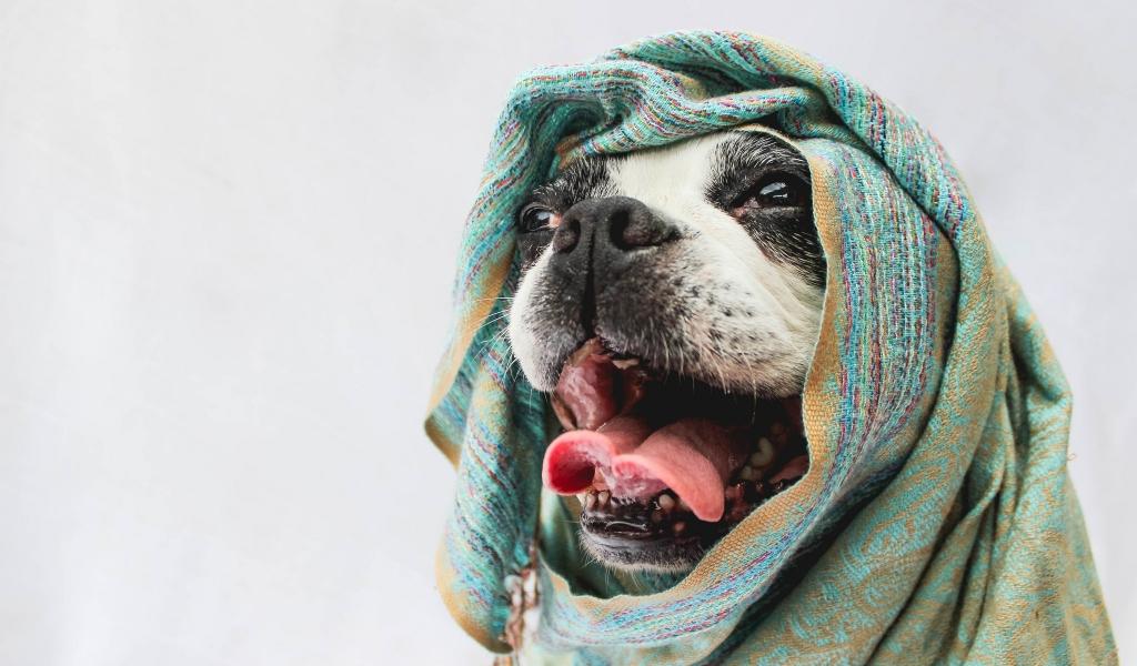 Bufandas para perros - 1024x600