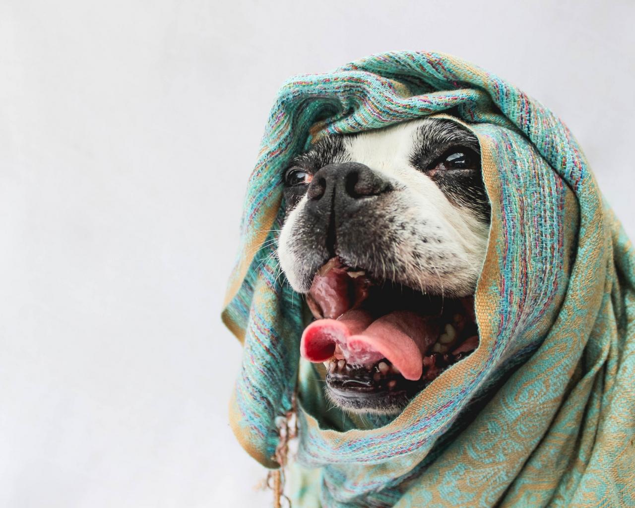 Bufandas para perros - 1280x1024