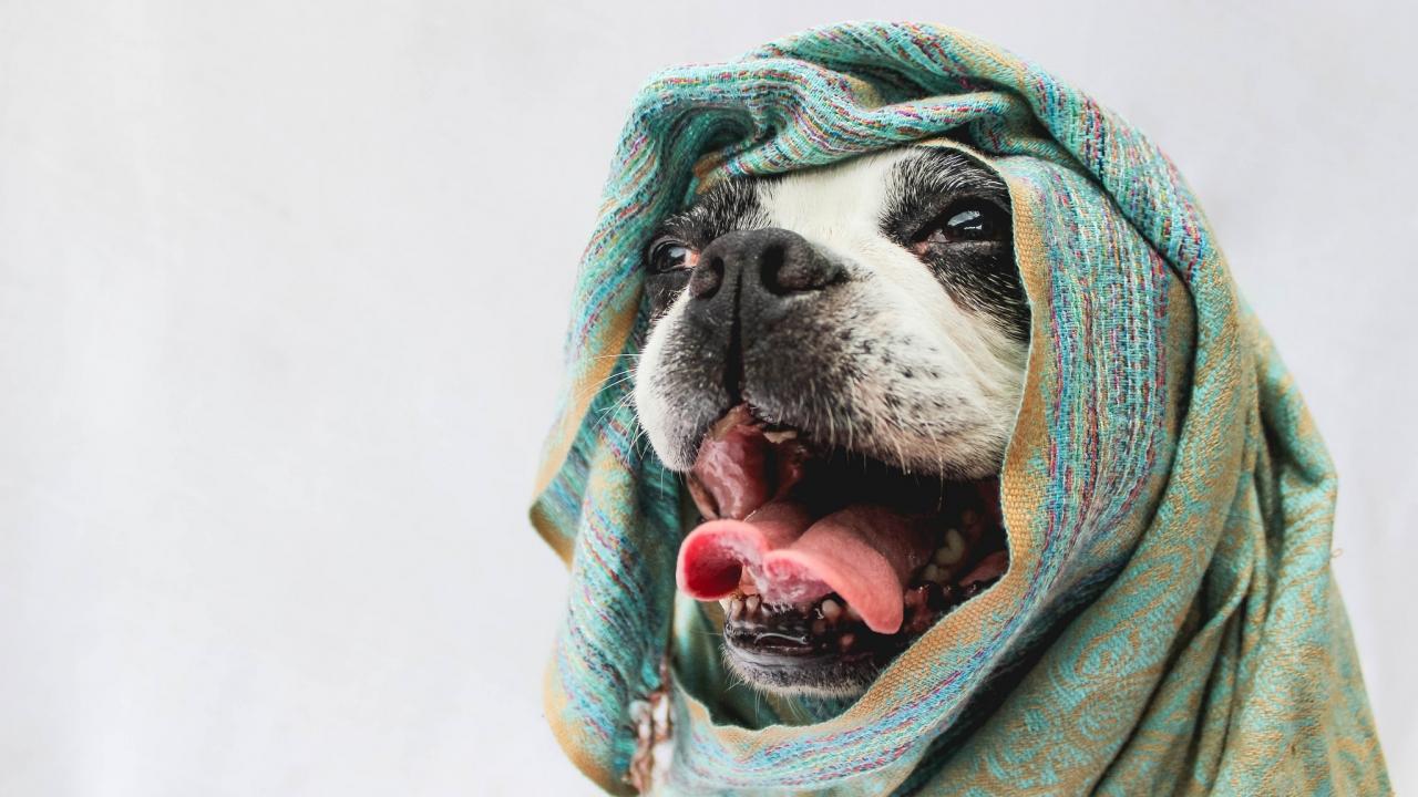 Bufandas para perros - 1280x720